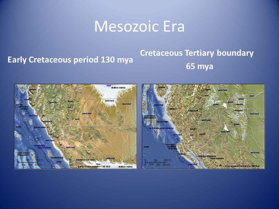Mesozoic Era Early Cretaceous period 130 mya Cretaceous Tertiary boundary 65 mya