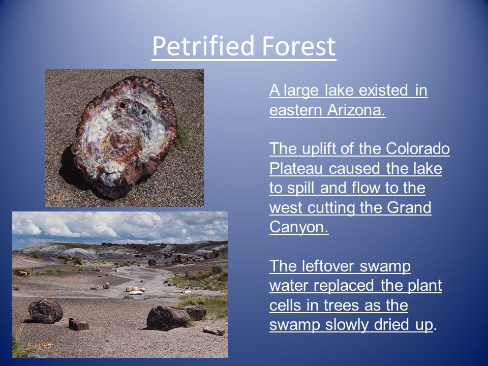 Petrified Forest A large lake existed in eastern Arizona.