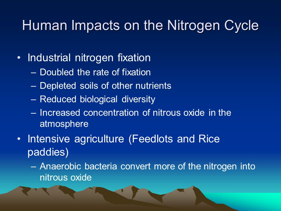 Human Impacts on the Nitrogen Cycle Industrial nitrogen fixation –Doubled the rate of fixation –Depleted soils of other nutrients –Reduced biological diversity –Increased concentration of nitrous oxide in the atmosphere Intensive agriculture (Feedlots and Rice paddies) –Anaerobic bacteria convert more of the nitrogen into nitrous oxide
