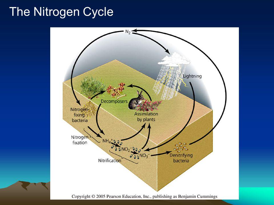 Fluxes –Nitrogen fixation Lightning Biological Industrial (Haber-Bosch) –Assimilation –Decomposition –Nitrification –Denitrification Energy