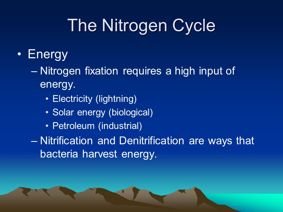 Human Impacts on the Nitrogen Cycle Industrial nitrogen fixation Intensive agriculture (Feedlots and Rice Paddies)