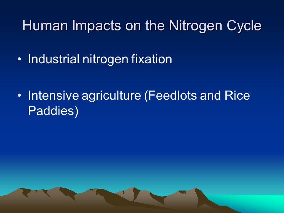 Human Impacts on the Carbon Cycle Burning Fossil Fuels –Moves carbon out of a stable reservoir and into the atmosphere Deforestation –Decreases the amount of carbon pulled out of the atmosphere Industrial nitrogen fixation –Increases photosynthesis and pulls carbon out of the atmosphere