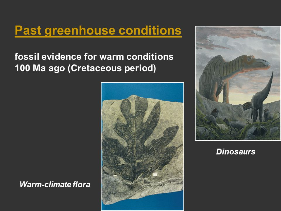 Past greenhouse conditions fossil evidence for warm conditions 100 Ma ago (Cretaceous period) Dinosaurs Warm-climate flora