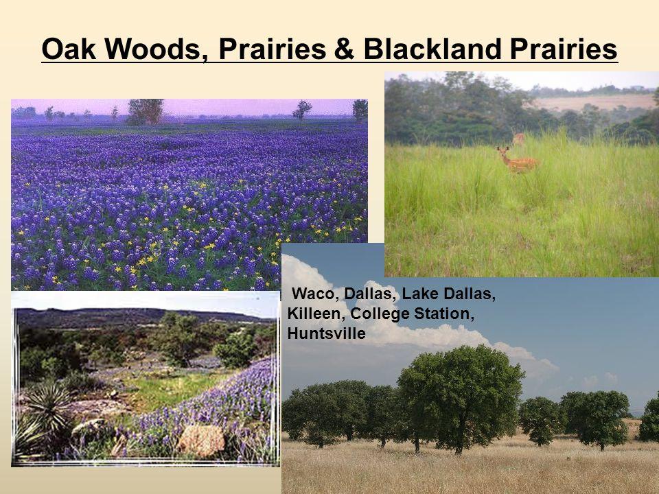 Oak Woods, Prairies & Blackland Prairies Waco, Dallas, Lake Dallas, Killeen, College Station, Huntsville