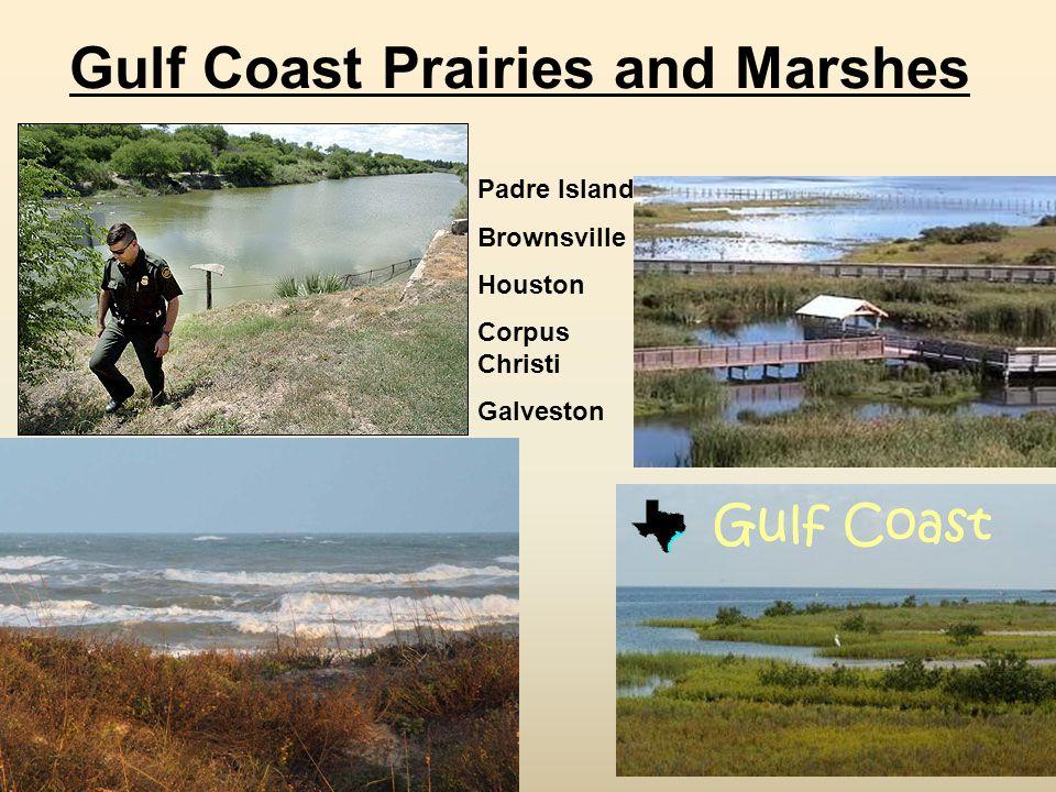 Gulf Coast Prairies and Marshes Padre Island Brownsville Houston Corpus Christi Galveston