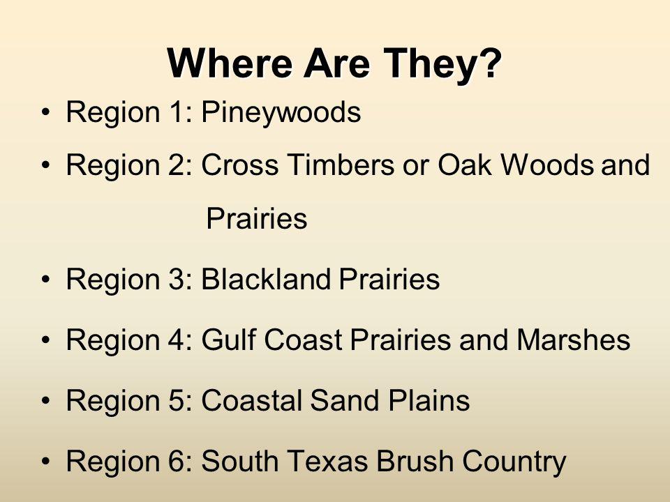 Where Are They? Region 1: Pineywoods Region 2: Cross Timbers or Oak Woods and Prairies Region 3: Blackland Prairies Region 4: Gulf Coast Prairies and
