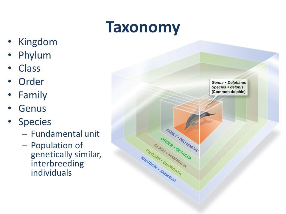 Taxonomy Kingdom Phylum Class Order Family Genus Species – Fundamental unit – Population of genetically similar, interbreeding individuals