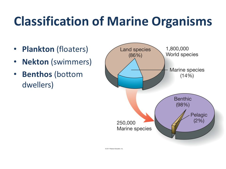 Classification of Marine Organisms Plankton (floaters) Nekton (swimmers) Benthos (bottom dwellers)
