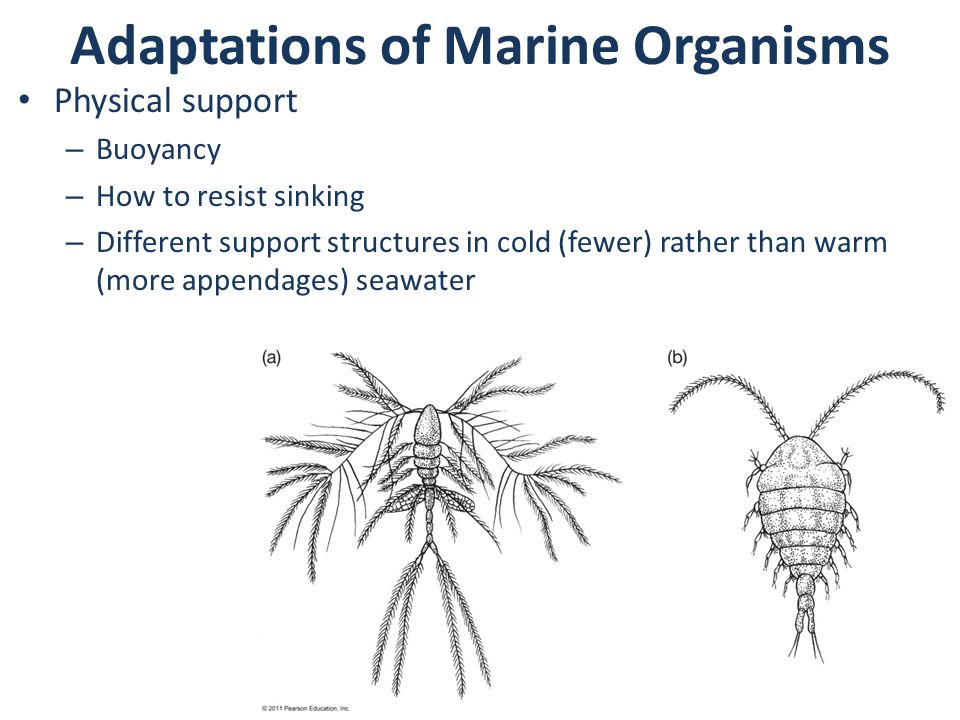 Adaptations of Marine Organisms Physical support – Buoyancy – How to resist sinking – Different support structures in cold (fewer) rather than warm (more appendages) seawater
