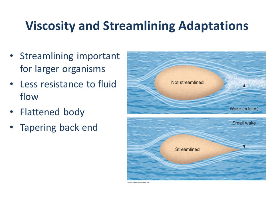 Viscosity and Streamlining Adaptations Streamlining important for larger organisms Less resistance to fluid flow Flattened body Tapering back end
