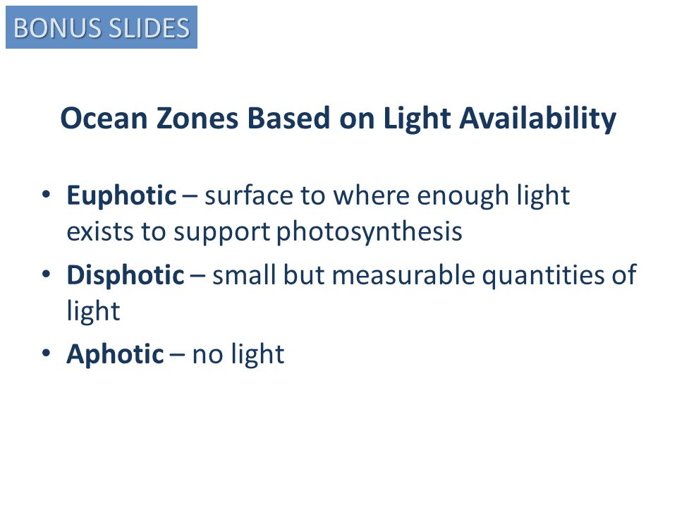 Ocean Zones Based on Light Availability Euphotic – surface to where enough light exists to support photosynthesis Disphotic – small but measurable quantities of light Aphotic – no light BONUS SLIDES