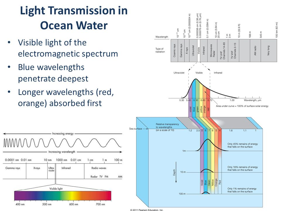 Light Transmission in Ocean Water Visible light of the electromagnetic spectrum Blue wavelengths penetrate deepest Longer wavelengths (red, orange) absorbed first
