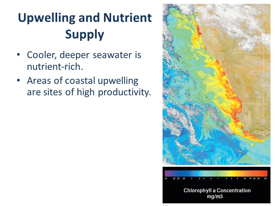 Upwelling and Nutrient Supply Cooler, deeper seawater is nutrient-rich.