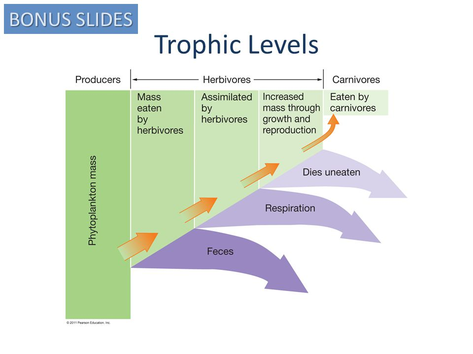 Trophic Levels BONUS SLIDES