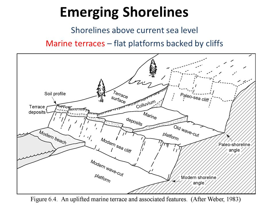 Emerging Shorelines Shorelines above current sea level Marine terraces – flat platforms backed by cliffs