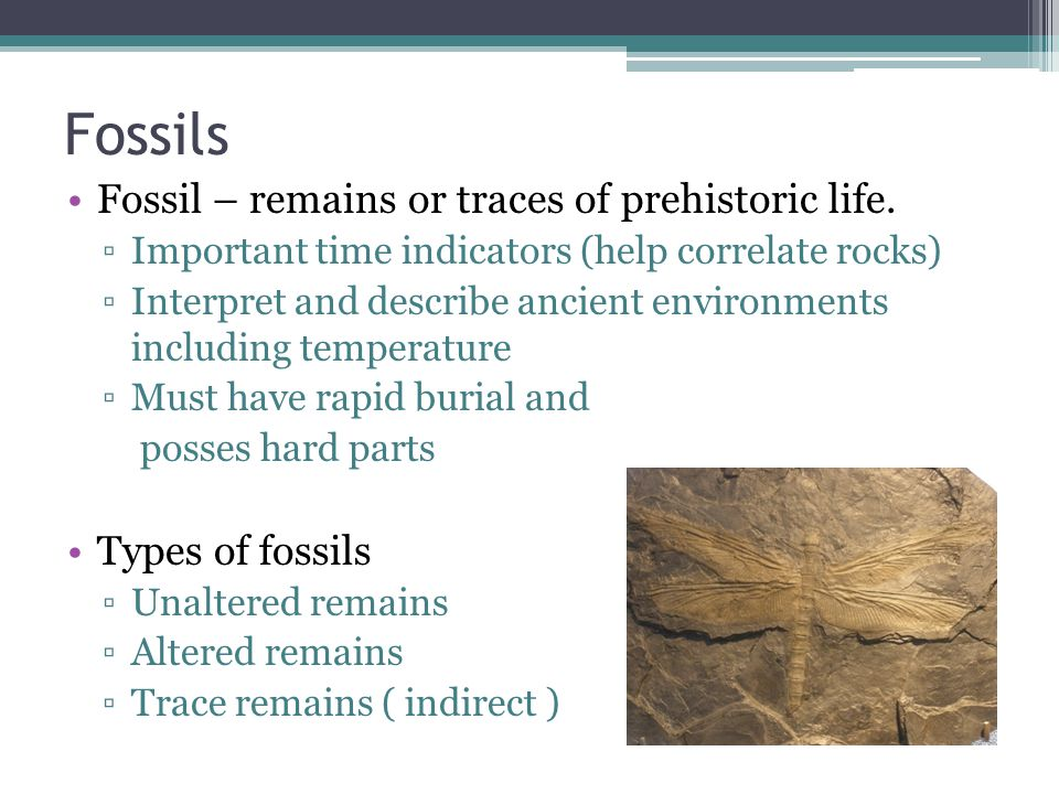 Fossils Fossil – remains or traces of prehistoric life.