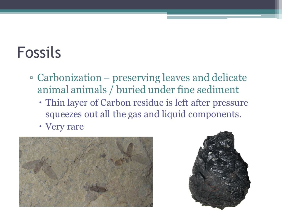 ▫Carbonization – preserving leaves and delicate animal animals / buried under fine sediment  Thin layer of Carbon residue is left after pressure squeezes out all the gas and liquid components.