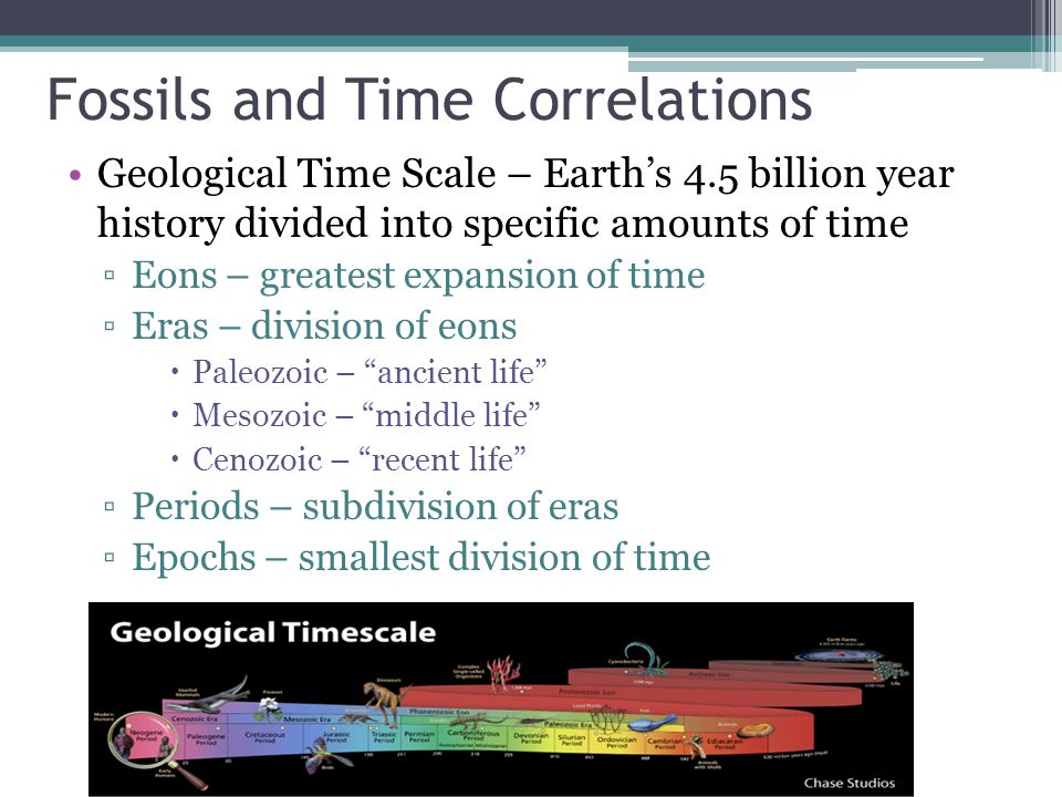 Fossils and Time Correlations Geological Time Scale – Earth's 4.5 billion year history divided into specific amounts of time ▫Eons – greatest expansion of time ▫Eras – division of eons  Paleozoic – ancient life  Mesozoic – middle life  Cenozoic – recent life ▫Periods – subdivision of eras ▫Epochs – smallest division of time