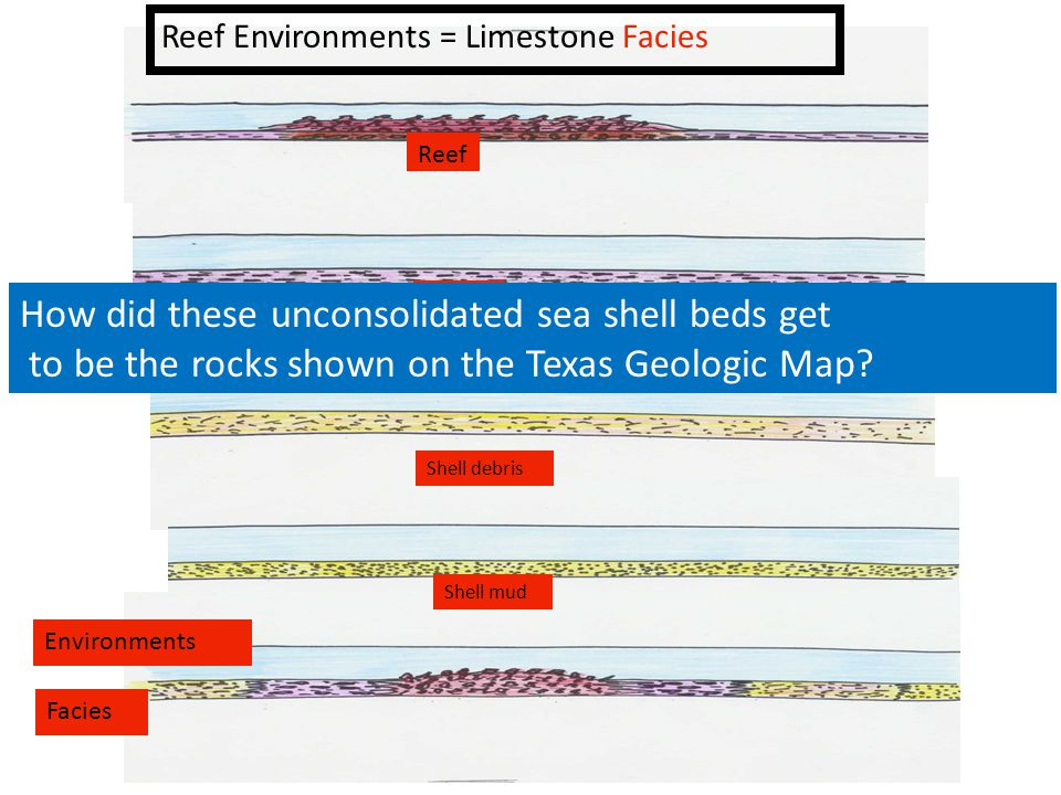 Reef Environments = Limestone Facies Environments Facies Reef Shells Shell debris Shell mud How did these unconsolidated sea shell beds get to be the rocks shown on the Texas Geologic Map?