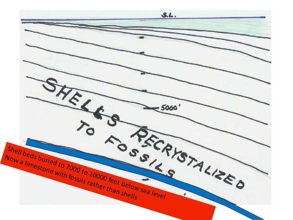 Shell beds buried to 7000 to 10000 feet below sea level Now a limestone with fossils rather than shells