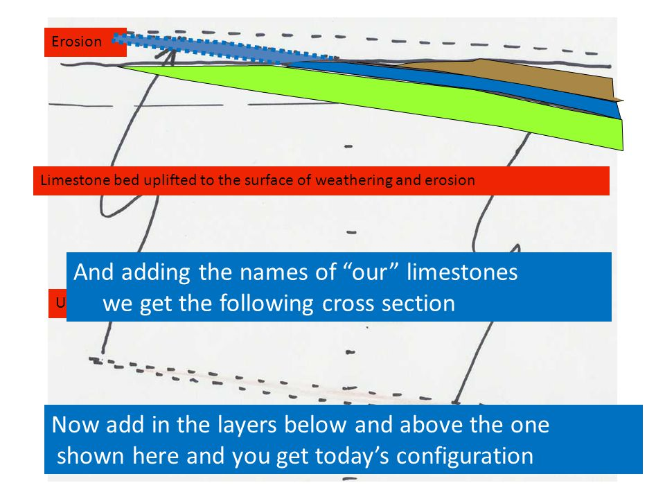 Limestone bed uplifted to the surface of weathering and erosion Uplift Erosion Now add in the layers below and above the one shown here and you get today's configuration And adding the names of our limestones we get the following cross section
