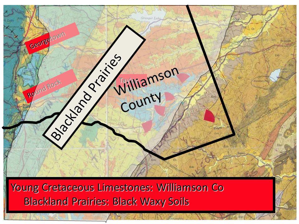 G e o r g e t o w n R o u n d R o c k Taylor Young Cretaceous Limestones: Williamson Co Blackland Prairies: Black Waxy Soils Blackland Prairies: Black Waxy Soils W i l l i a m s o n C o u n t y B l a c k l a n d P r a i r i e s