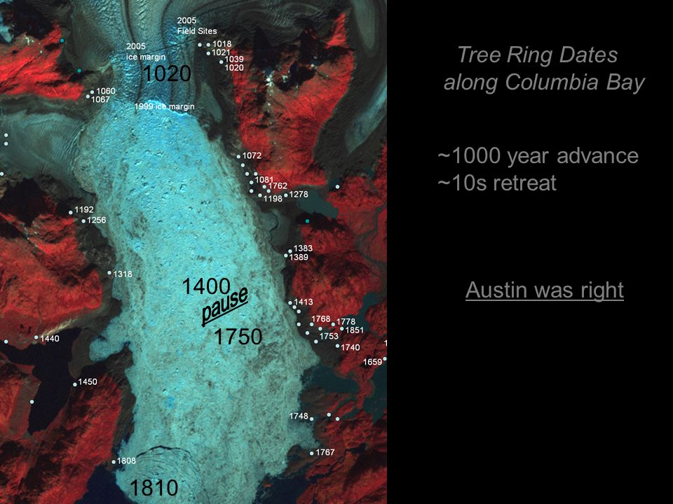 Tree Ring Dates along Columbia Bay ~1000 year advance ~10s retreat 1020 1400 1810 1750 Austin was right