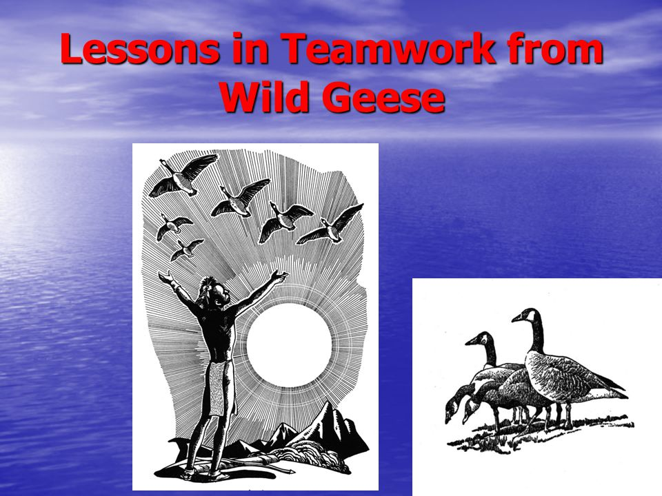 Lessons in Teamwork from Wild Geese
