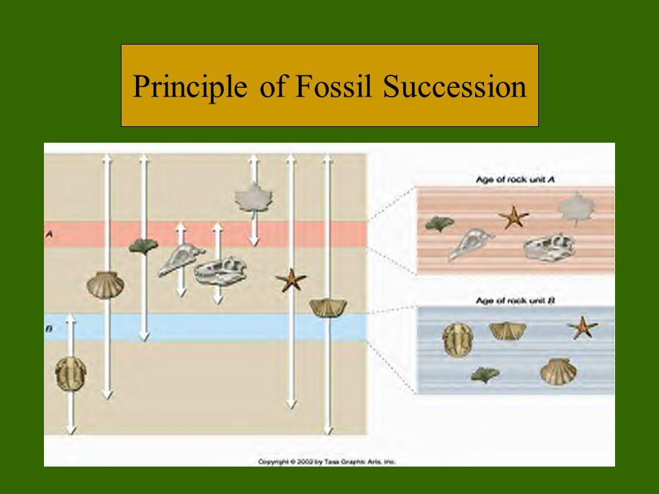 Principle of Fossil Succession