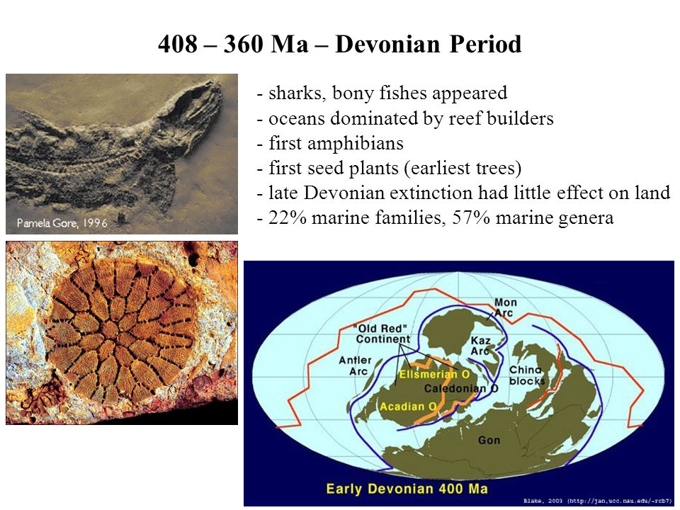 408 – 360 Ma – Devonian Period - sharks, bony fishes appeared - oceans dominated by reef builders - first amphibians - first seed plants (earliest tre