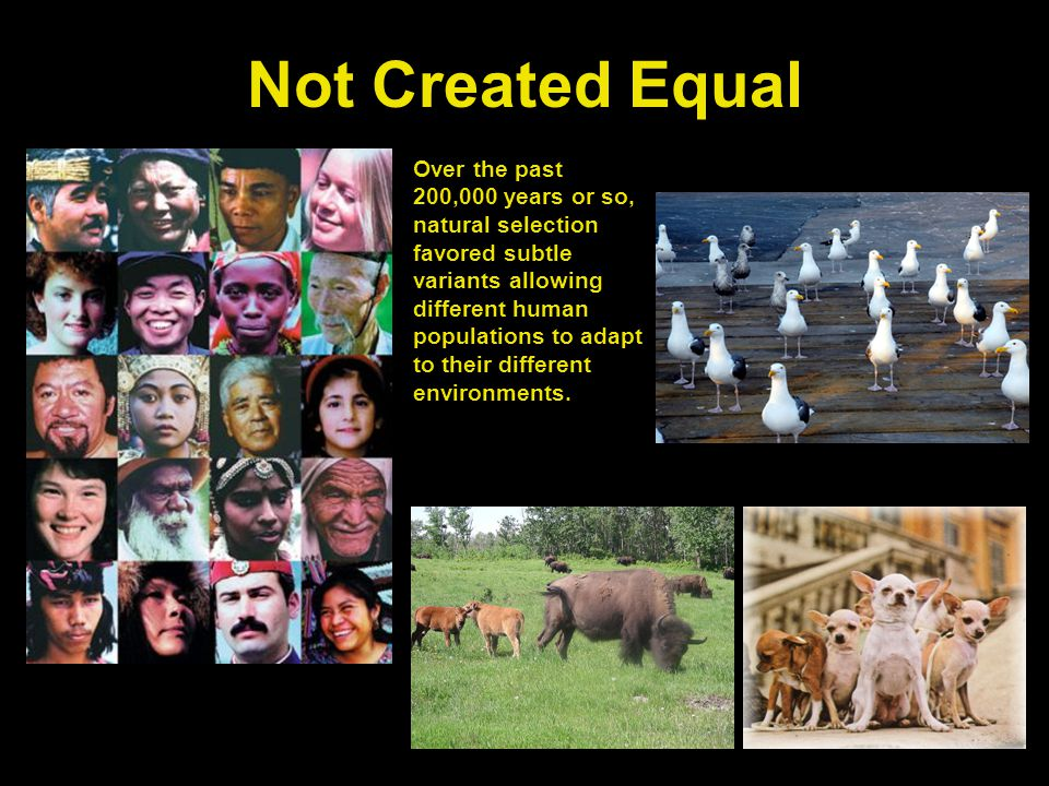 Not Created Equal Over the past 200,000 years or so, natural selection favored subtle variants allowing different human populations to adapt to their different environments.