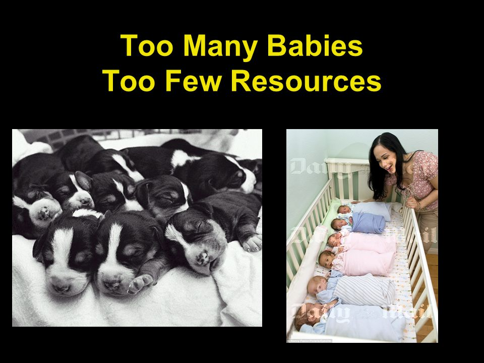 Too Many Babies Too Few Resources