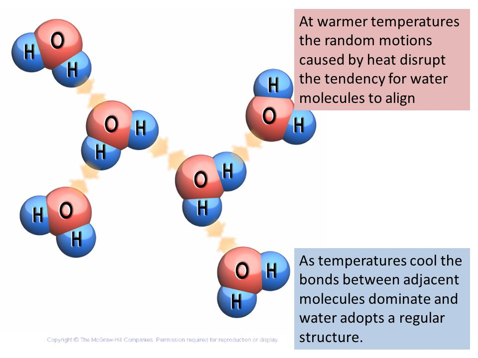 At warmer temperatures the random motions caused by heat disrupt the tendency for water molecules to align As temperatures cool the bonds between adjacent molecules dominate and water adopts a regular structure.