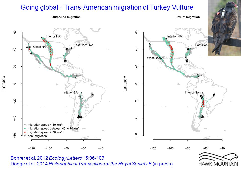 Going global - Trans-American migration of Turkey Vulture Bohrer et al.