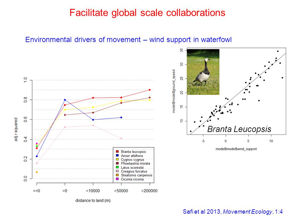 Branta Leucopsis Safi et al 2013, Movement Ecology, 1:4 Facilitate global scale collaborations Environmental drivers of movement – wind support in waterfowl