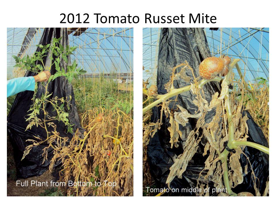 2012 Tomato Russet Mite