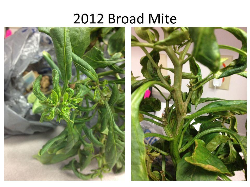 2012 Broad Mite
