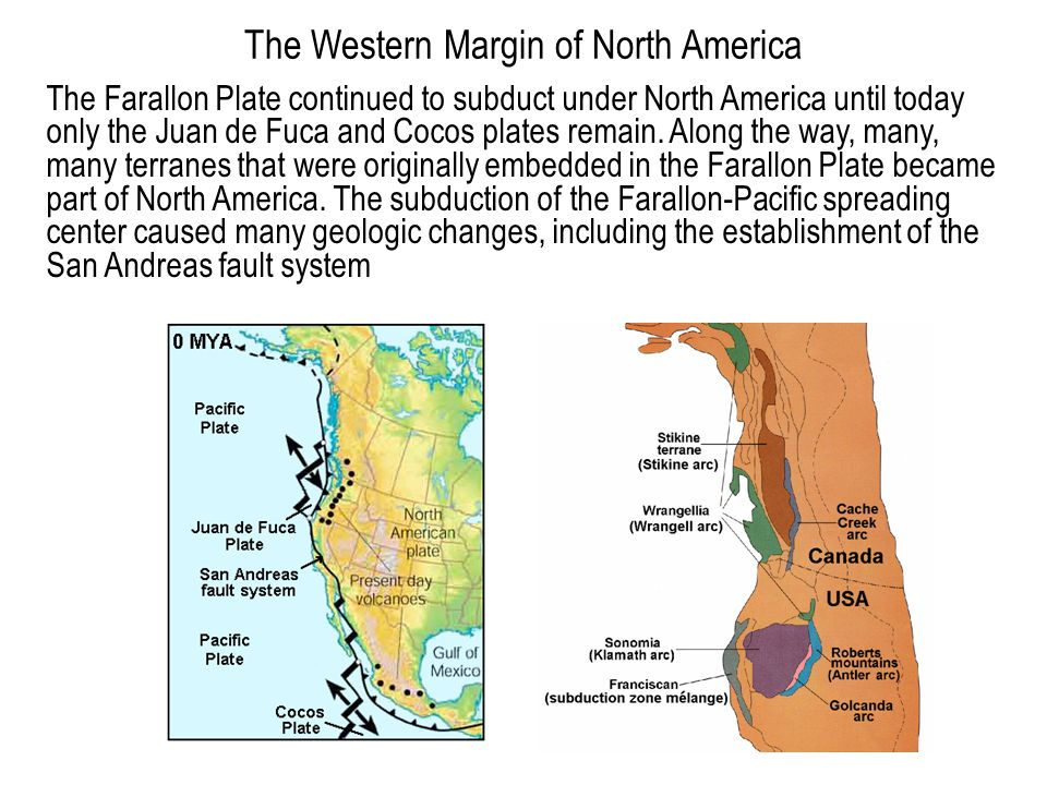 The Western Margin of North America The Farallon Plate continued to subduct under North America until today only the Juan de Fuca and Cocos plates rem