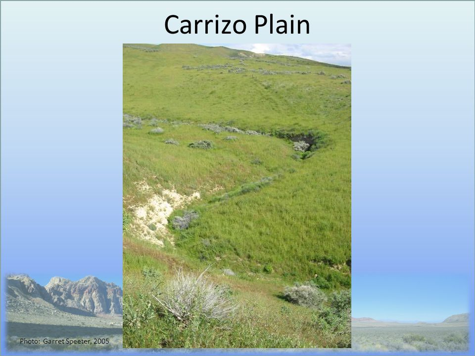 Carrizo Plain Photo: Garret Speeter, 2005
