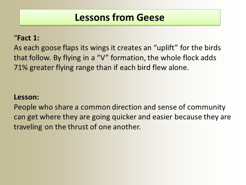Fact 1: As each goose flaps its wings it creates an uplift for the birds that follow.