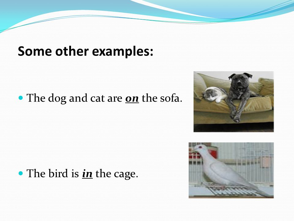Some other examples: The dog and cat are on the sofa. The bird is in the cage.
