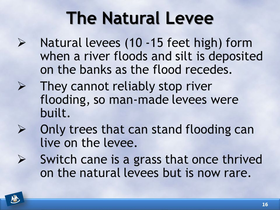 The Natural Levee  Natural levees (10 -15 feet high) form when a river floods and silt is deposited on the banks as the flood recedes.  They cannot