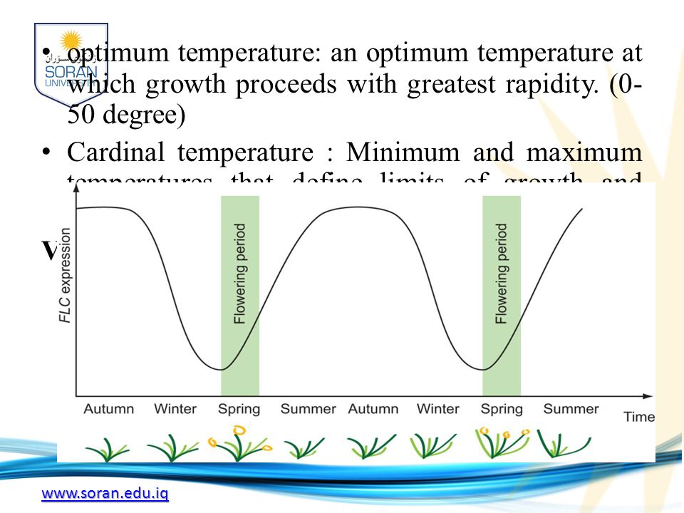 www.soran.edu.iq Thermoperiodism The effect on an organism of the rhythmic fluctuation of temperature, including responses associated with thermal changes accompanying the alternation of day and night.