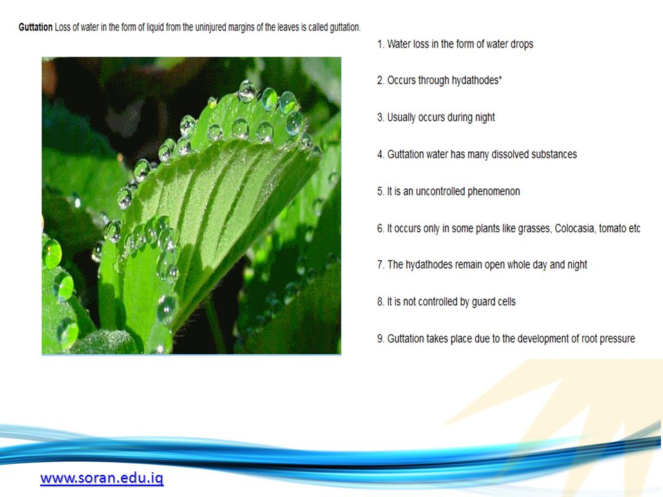 Aquatic plant Aquatic plants are plants that have adapted to living in aquatic environments (saltwater or freshwater).