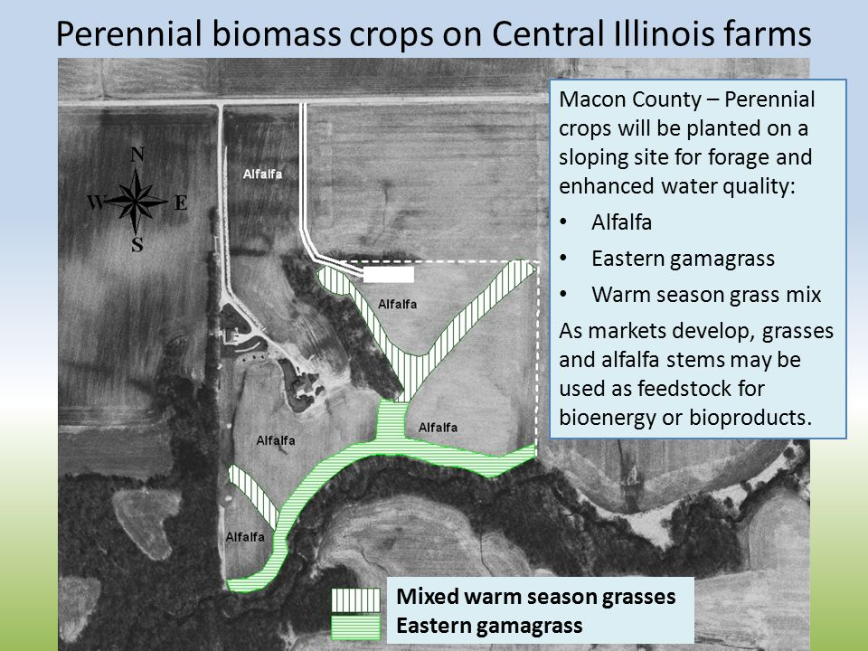 Perennial biomass crops on Central Illinois farms Macon County – Perennial crops will be planted on a sloping site for forage and enhanced water quality: Alfalfa Eastern gamagrass Warm season grass mix As markets develop, grasses and alfalfa stems may be used as feedstock for bioenergy or bioproducts.