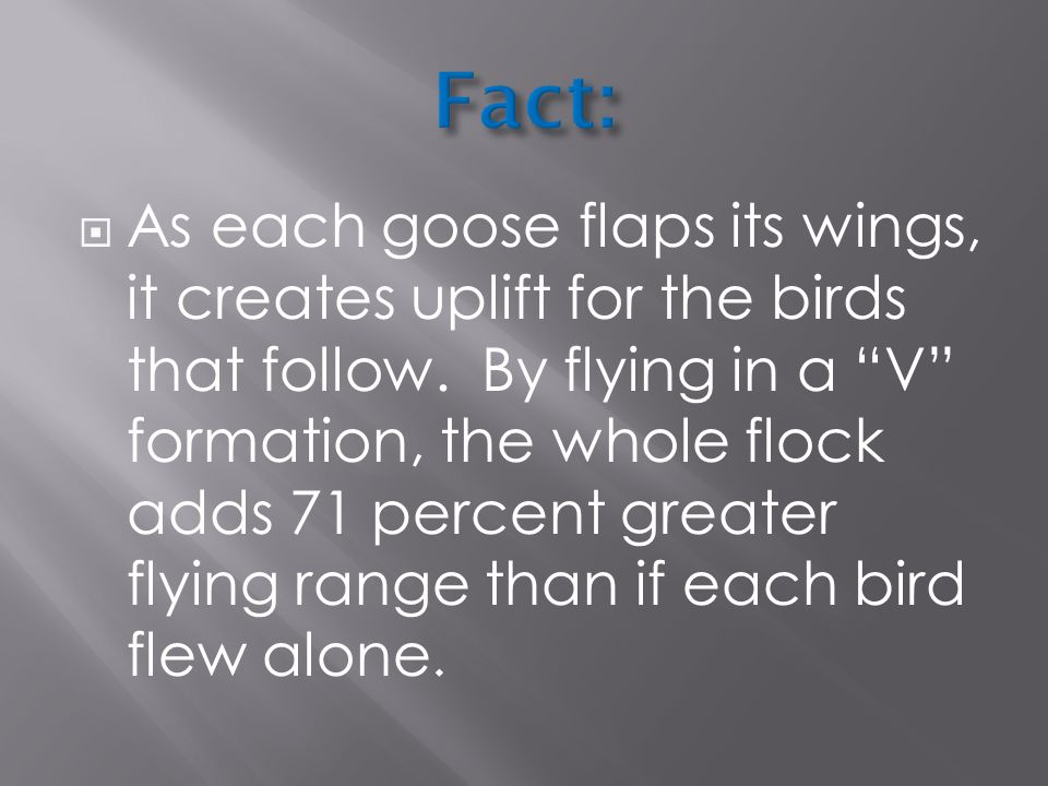  As each goose flaps its wings, it creates uplift for the birds that follow.
