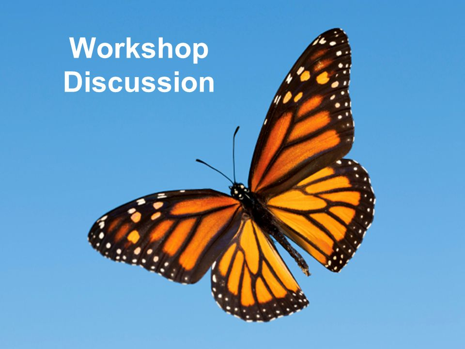Workshop Discussion