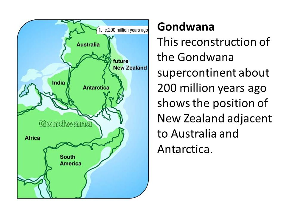 Gondwana This reconstruction of the Gondwana supercontinent about 200 million years ago shows the position of New Zealand adjacent to Australia and Antarctica.