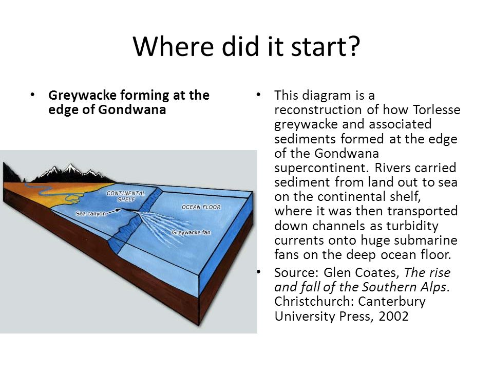 Where did it start? Greywacke forming at the edge of Gondwana This diagram is a reconstruction of how Torlesse greywacke and associated sediments form