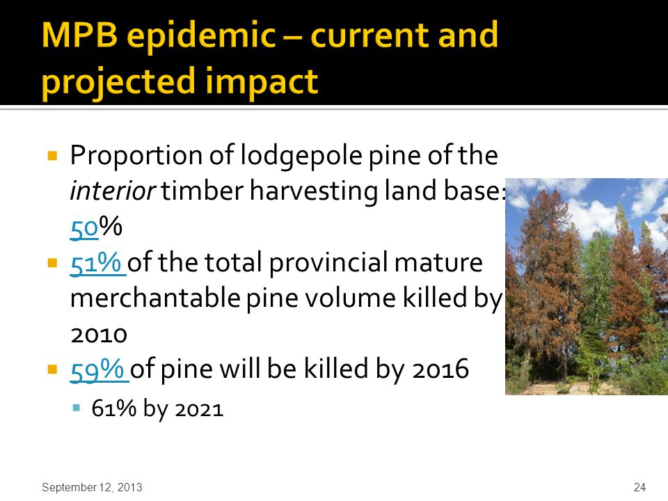  Proportion of lodgepole pine of the interior timber harvesting land base: 50% 50  51% of the total provincial mature merchantable pine volume killed by 2010 51%  59% of pine will be killed by 2016 59%  61% by 2021 September 12, 2013 24